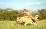 """Old Yeller"" (1957): In the era of ""Lassie,"" Old Yeller was America's other favorite dog, and was the epitome of the tough decisions we have to face as we move out of childhood. We understand that Old Yeller had to be put down, but no, we're still not over it. (Yeller's best friend was played by Kevin Corcoran.)"